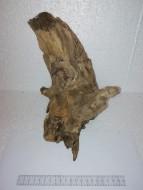 Коряга 021 дуб для аквариума, натуральная и обработанная 20х18х25 см