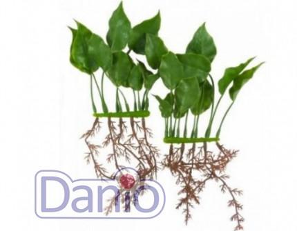 Hagen Искусственное растение Hagen Marina Anubias 20 см - Картинка 1
