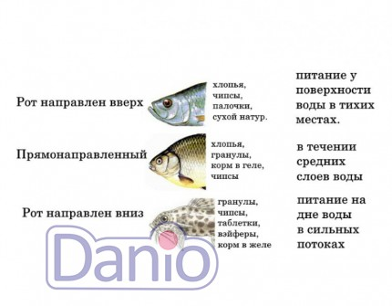 Корм для рыб, корм для аквариумных рыбок, как выбрать корм для р