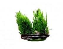 Искусственное растение Hagen Marina Willow Moss 11см