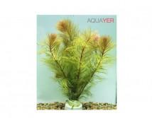 Перистолистник рорайма (Myriophyllum sp. Roraima) цена за 1 ветку